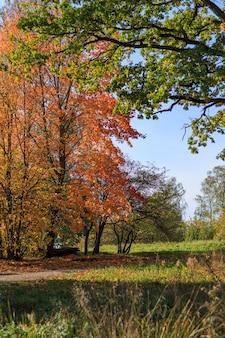 Início do outono, árvores de bordo na folhagem laranja em um dia ensolarado