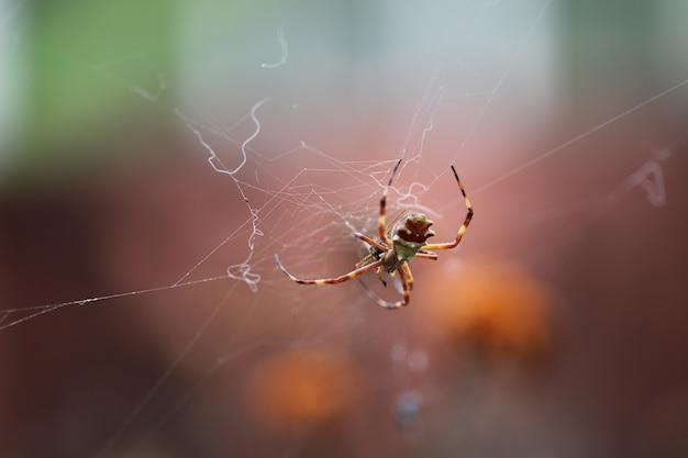 Inseto comedor de aranha