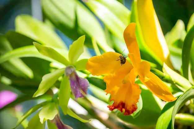 Inseto em flores amarelas no jardim.