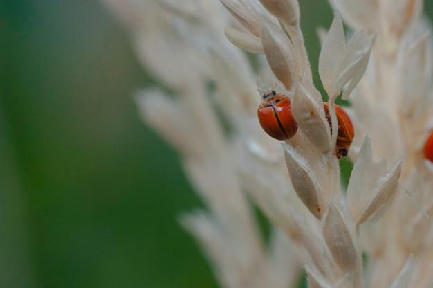 Inseto pequeno joaninha no meio da natureza verde