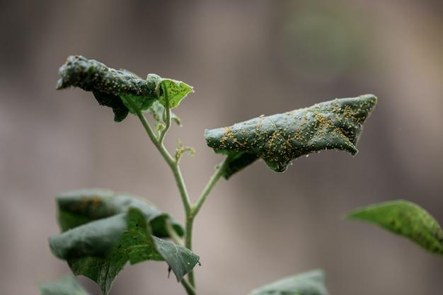 Insetos em folhas