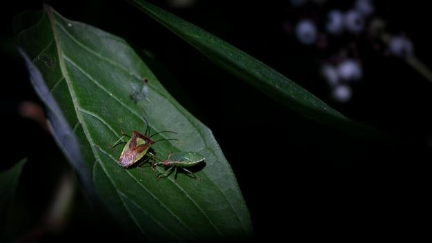 Insetos em uma folha verde