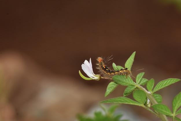 Insetos escorpião com a natureza