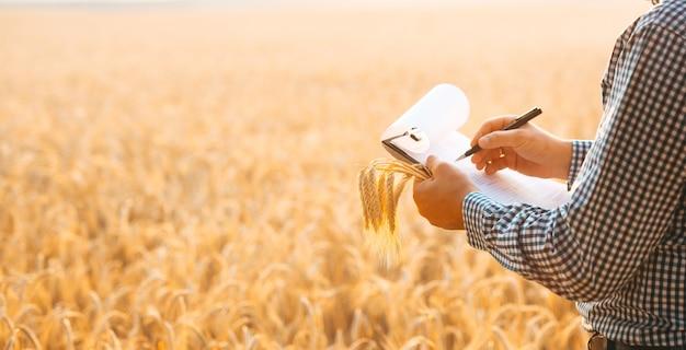 Inspetor agrônomo que examina a plantação de trigo e faz anotações em documentos.