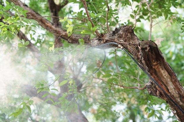 Instalação de bocal de pulverizador de água de nevoeiro na árvore para a planta de rega