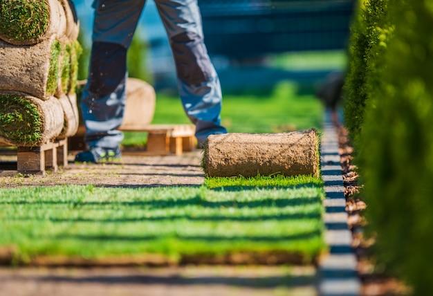 Instalação de gramado de grama natural.
