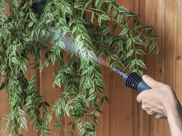 Instalações de limpeza gerador de vapor. tratamento antiparasitário. proteção de plantas contra parasitas.