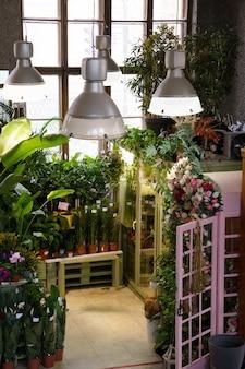 Interior da loja de plantas com diferentes plantas domésticas em vasos prontos para venda nas prateleiras das lojas