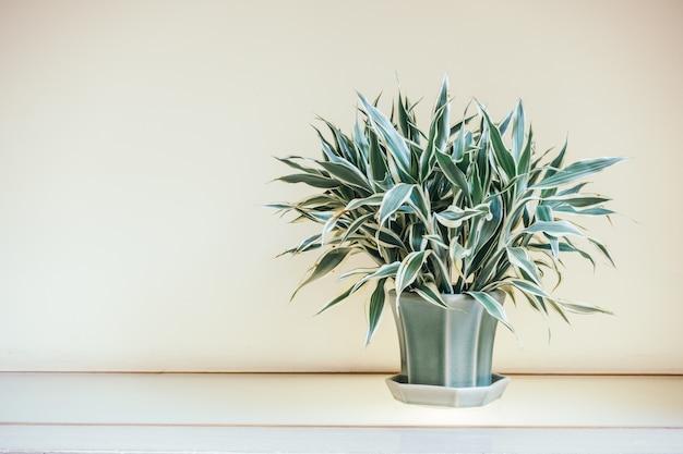 Interior de decoração de vaso