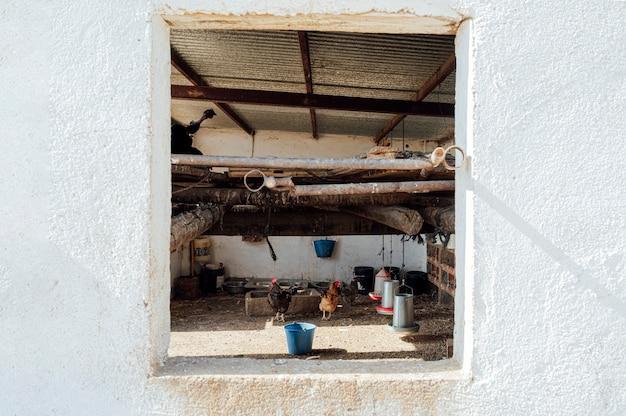Interior de galinheiro rural