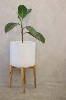 Interior de pote de planta verde tropical