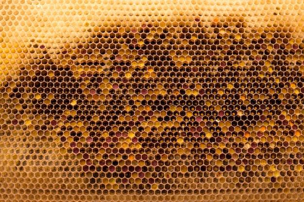 Interior de um favo de mel