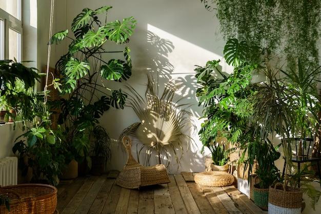 Interior de uma casa aconchegante com plantas monstera verdes frescas