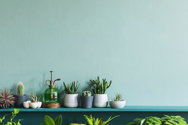 Interior elegante da sala de estar com belas plantas em diferentes potes de hipster e design na prateleira verde. parede verde. conceito moderno e floral de selva de jardim doméstico.
