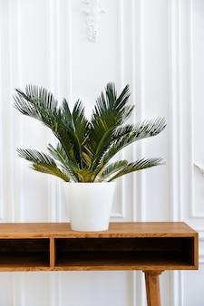 Interior limpo moderno no estilo escandinavo com um potenciômetro de flor e um houseplant.
