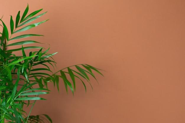 Interior moderno abstrato com planta verde, espaço de cópia de parede laranja escuro