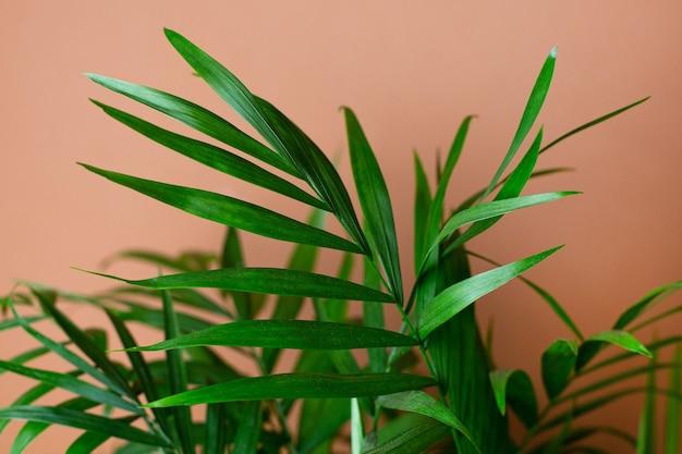 Interior moderno abstrato com planta verde, macro de parede laranja escuro