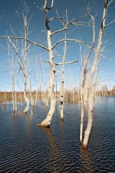Inundação de primavera em madeira de carvalho seco
