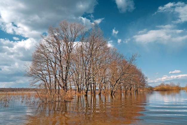 Inundação de primavera em madeira de carvalho