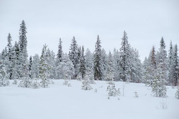 Inverno bela paisagem com árvores cobertas com gelo