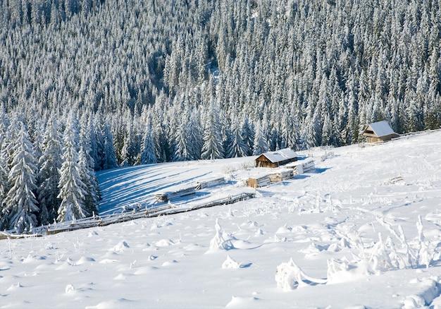 Inverno calmo paisagem montanhosa com geada e árvores abetos cobertos de neve com grupo de galpões perto da floresta