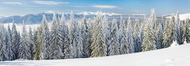 Inverno calmo paisagem montanhosa com geada e árvores spruce cobertas de neve. três tiros costuram a imagem.