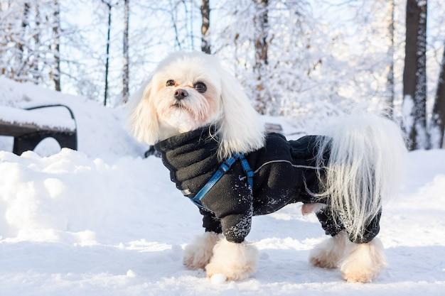 Inverno cão neve
