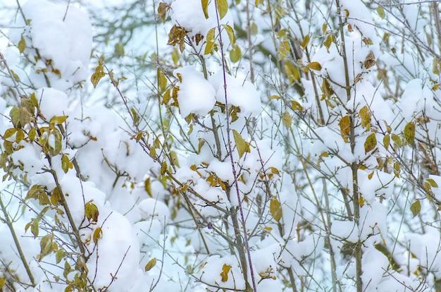 Inverno com folhas de árvore de galhos de neve.