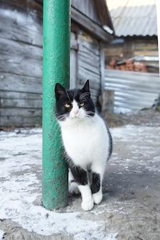 Inverno de aldeia de gato