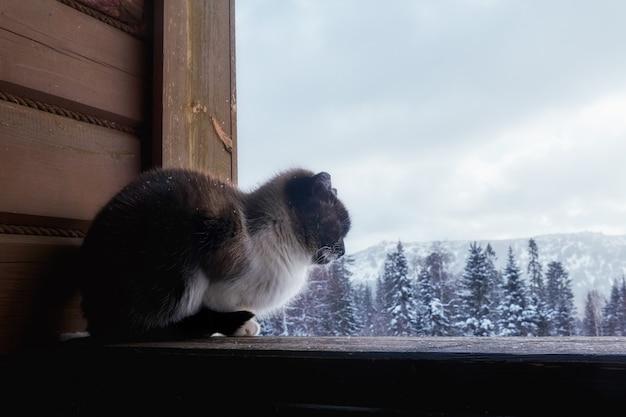 Inverno de gato na aldeia sentada na rua perto da casa.