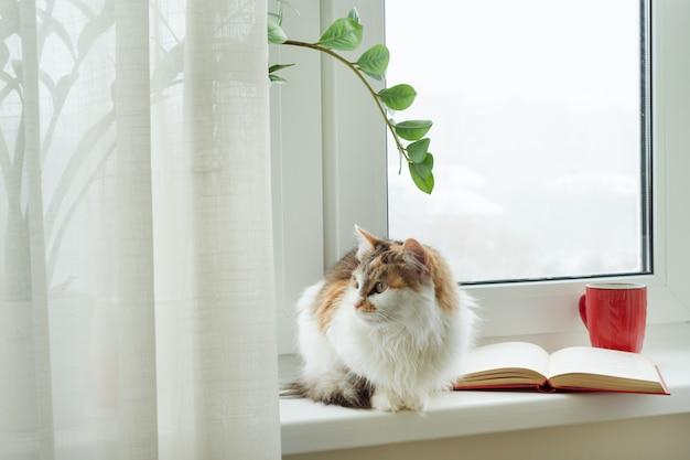 Inverno, gato sentado no parapeito da janela