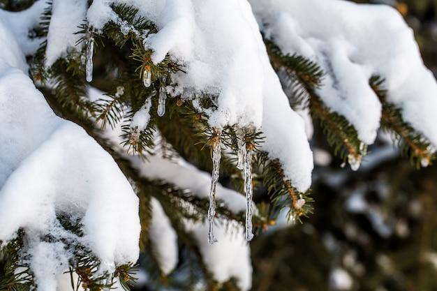 Inverno na floresta