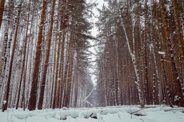 Inverno na floresta.
