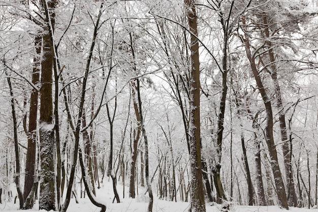 Invernos frios e com neve Foto Premium