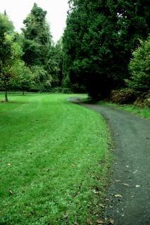Irlanda, sozinho, treelined