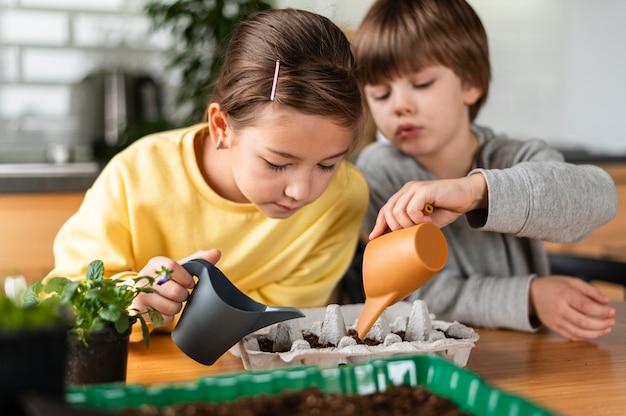 Irmã e irmão regando sementes em casa