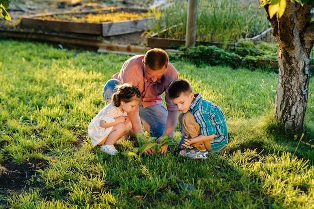 Irmão e irmã estão plantando mudas com o pai em um belo jardim primavera ao pôr do sol. vida nova. salve o meio ambiente. atitude cuidadosa com o mundo circundante e a natureza.
