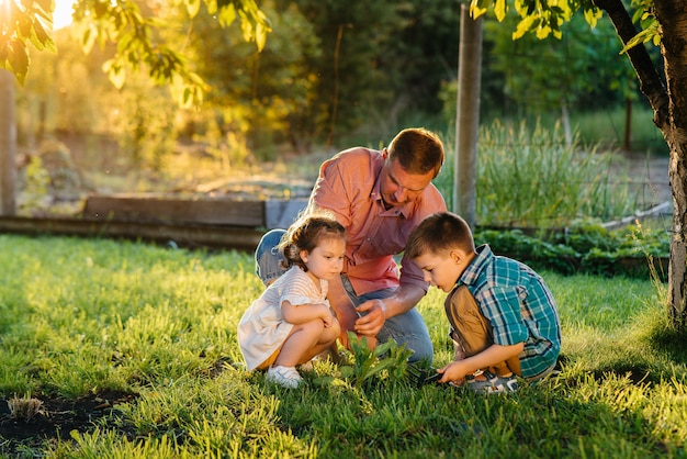Irmão e irmã estão plantando mudas com o pai em um lindo jardim de primavera ao pôr do sol.