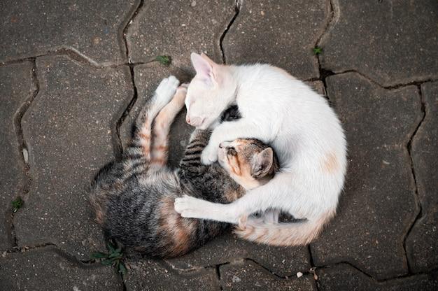Irmãos gatinhos domésticos aninhados no chão