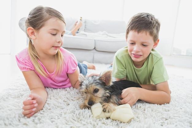Irmãos mentindo no tapete com seu filhote de yorkshire terrier