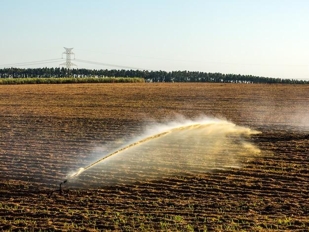Irrigação de plantio de cana no brasil