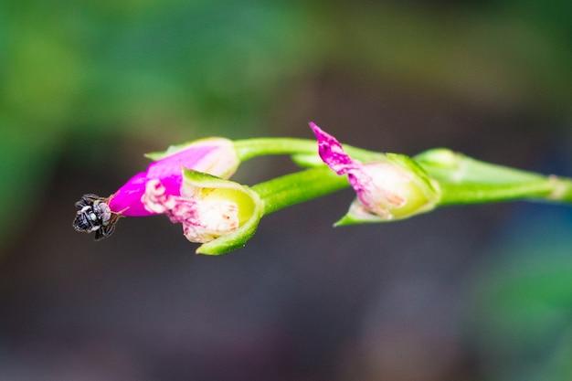 Isolado pequeno cor-de-rosa das flores no fundo.