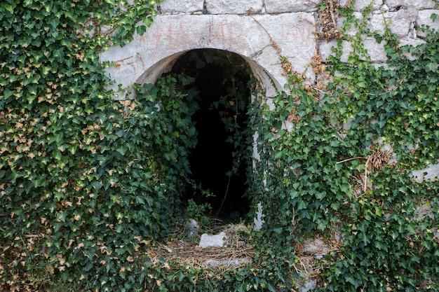 Ivy crescendo em um antigo túnel em montenegro