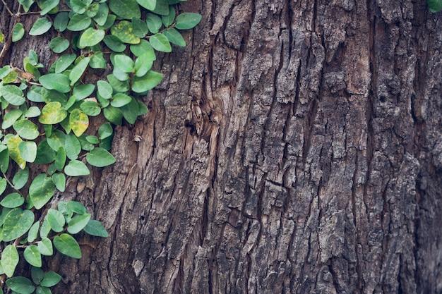 Ivy esticado para a casca da árvore dando um sentimento natural popular para decorar o jardim