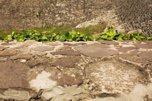 Ivy no fundo do antigo muro do castelo com pedras em uzhgorod