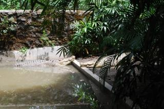Jacarés do zoológico de surabaya