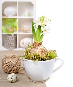 Jacinto branco em uma xícara e decorações de páscoa em uma sombra