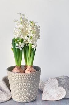Jacinto branco flores em vaso cinza e coração de madeira na luz de fundo.