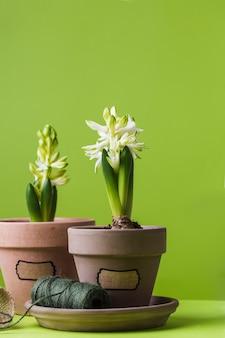 Jacinto conceito de primavera em ferramentas de jardinagem em vaso para luvas de borracha regador de corda no verde