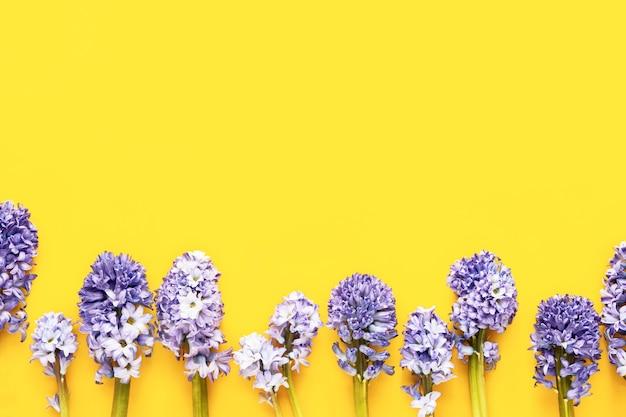 Jacintos azuis em fundo amarelo conceito de celebração de aniversário do dia das mães, dia dos namorados, vista superior